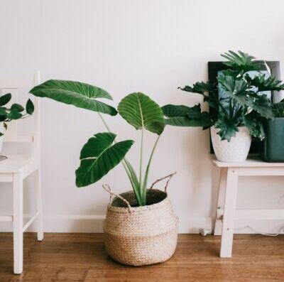 Mente sã na quarentena: cuidar de plantas vira passatempo para milhões de brasileiros