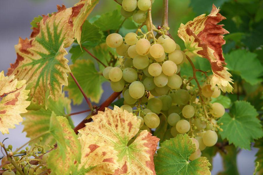 WINE LOVERS! 7 dicas para comprar o melhor vinho pela internet