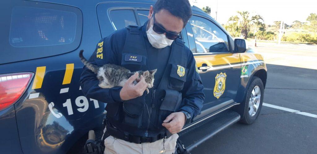 Agente da PRF flagra filhote de gato sendo arremessado de veículo e adota animal