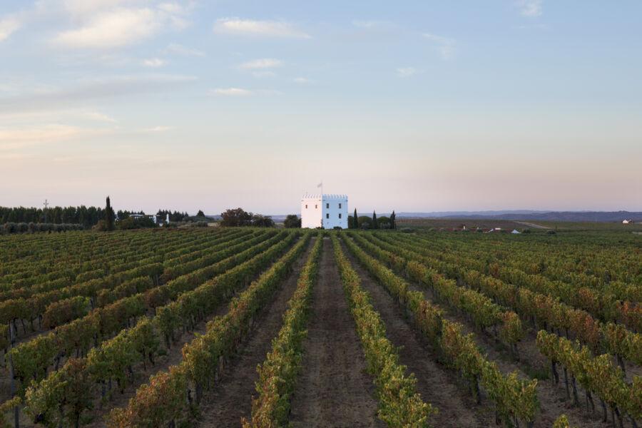 WINE LOVERS: vinho Madeira, por que é tão famoso?