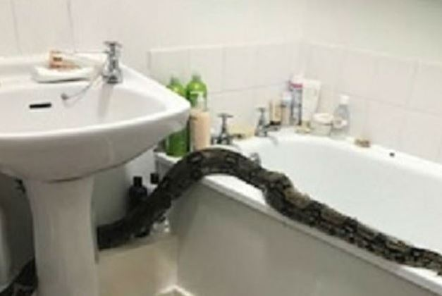 cobra-foge-escondida-banheiro-vizinha