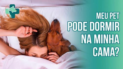 8 dicas para dormir com seu pet sem que haja transmissão de doenças para ambas as partes