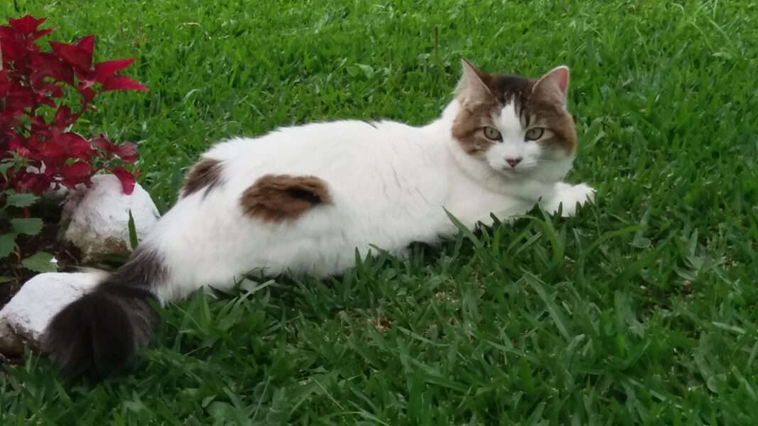 Keyko: gata foi vista pela última vez no bairro Uberaba em Curitiba
