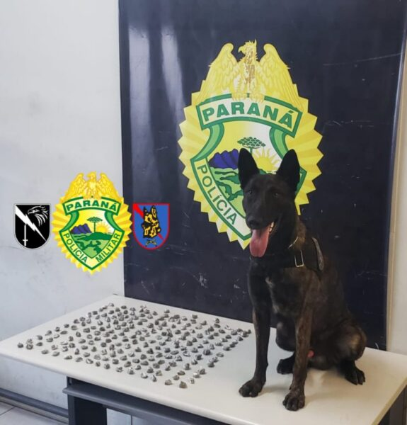 Cão farejador Hunter do BOPE auxilia policiais a encontrar drogas no Abranches