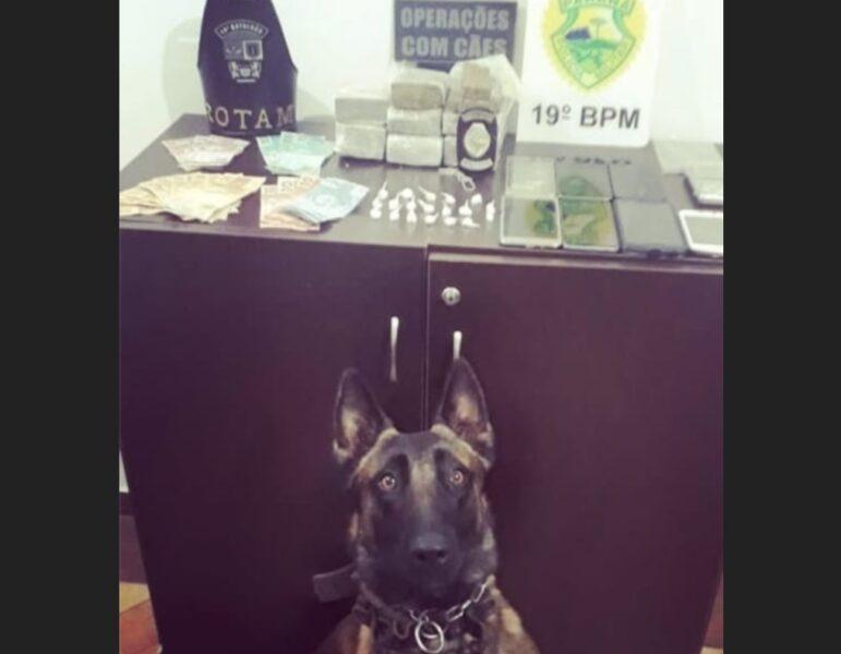 Policiais da Operações com Cães prendem dupla e apreendem drogas