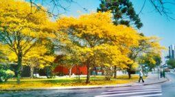 Primavera começa com previsão de chuvas abaixo da média no Paraná