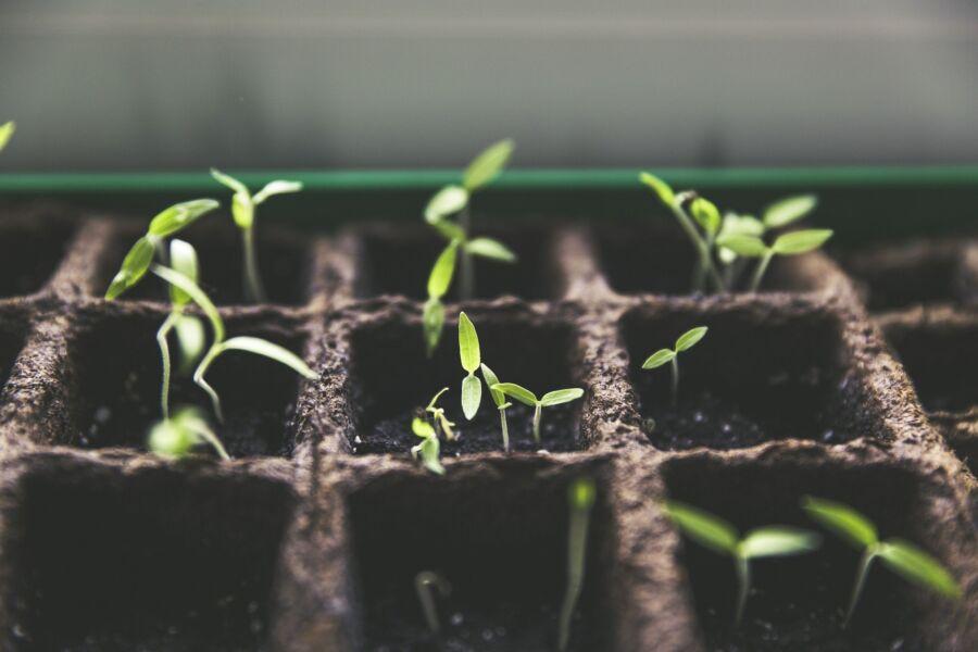 AT HOME: empresa dá dicas para plantar horta orgânica em casa