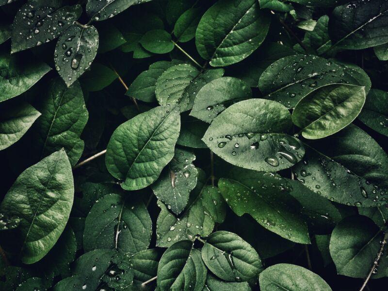 Especialistas em conservação da natureza apontam tendências positivas da nova realidade pós isolamento social