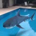 Animais 3D em tamanho real: Google disponibiliza animação para fotos e vídeos