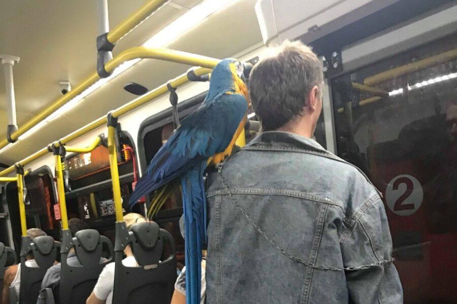 Homem é flagrado com arara no ombro dentro de ônibus, em Curitiba