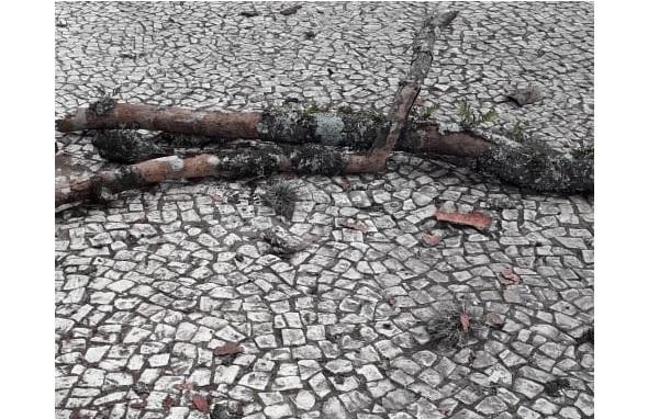 Idoso é atingido por galho na Praça Rui Barbosa e fica em estado grave