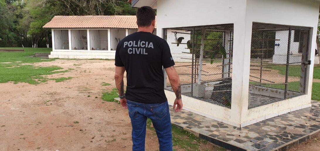 Polícia apreende aves ameaçadas de extinção em Balsa Nova