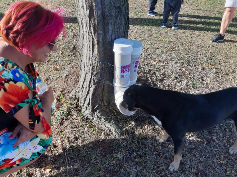 Animais de rua recebem comedouros e bebedouros em Curitiba
