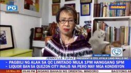 Gatos brigam atrás de jornalista ao vivo e vídeo viraliza na web