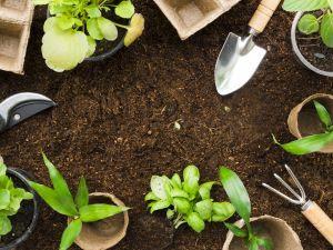 Horta medicinal é benéfica para sua saúde e bem-estar