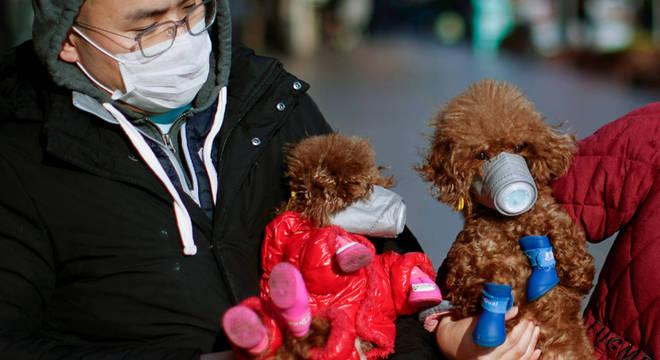 Cachorro tem resultado positivo para coronavírus e vai para quarentena