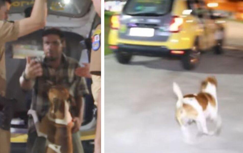 Cachorro se desespera ao ver dono ser preso e levado por viatura no interior do Paraná