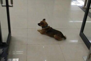 Cachorro espera o dono, morto por coronavírus, na porta de hospital na China