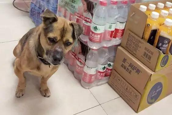 cachorro-espera-dono-hospital-china