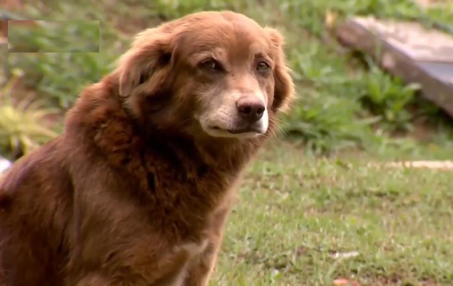 Cachorro mora no cemitério há 10 anos, desde a morte de sua dona