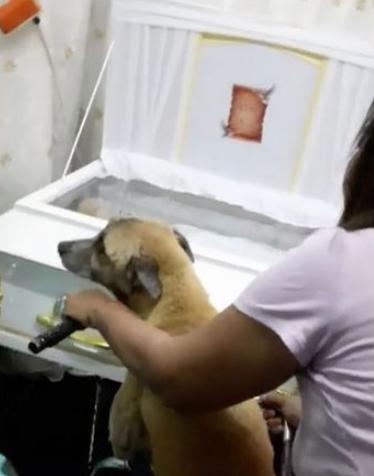 Cachorro se recusa a sair de perto do caixão do dono; veja o vídeo!
