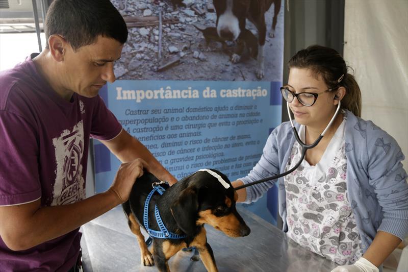 cães castração