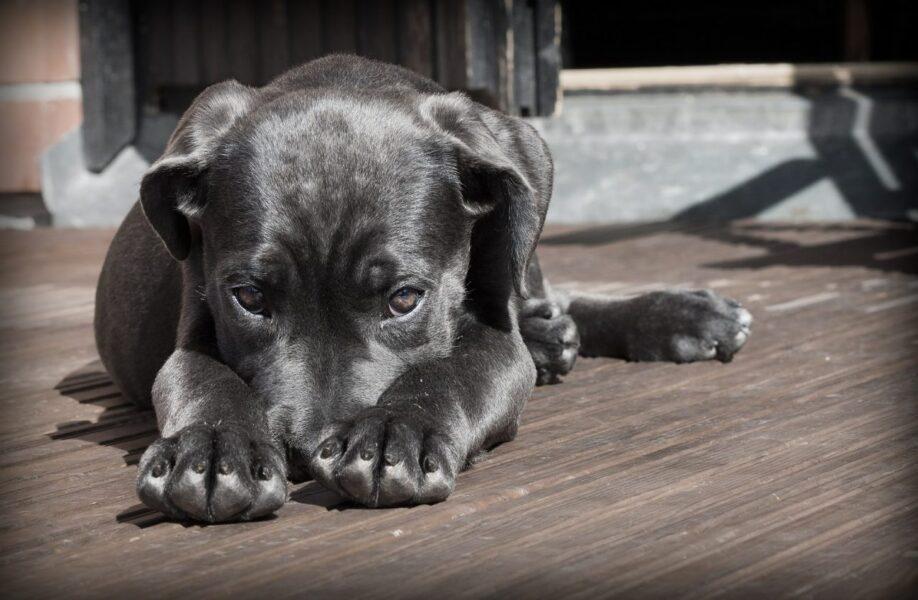 Castração de cachorro faz mal ou é indicado?