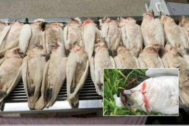 Bizarro: chuva de aves mortas deixa moradores aterrorizados