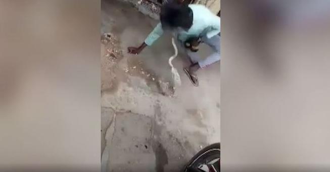 cobra morde lingua
