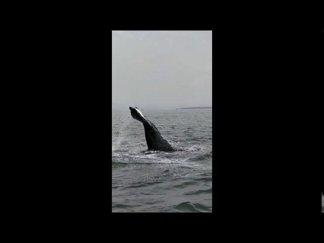 Baleia é avistada na Ilha do Mel