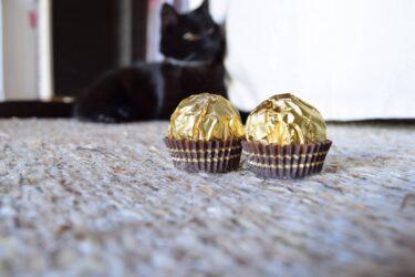 Chocolates oferecem perigos à saúde dos pets