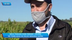 Seca: Paraná pode perder 1 milhão de toneladas de milho segunda safra