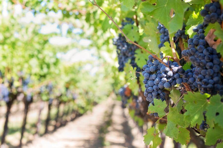 Importadora traz linha de vinhos chilenos premiados por James Suckling