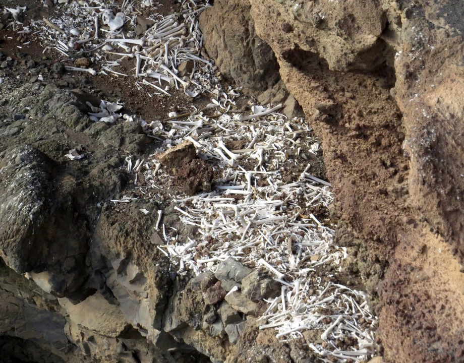 esqueletos ilhas canarias