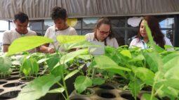 Projeto Cultivar produz mais de 50 mil mudas de árvores em Apaes