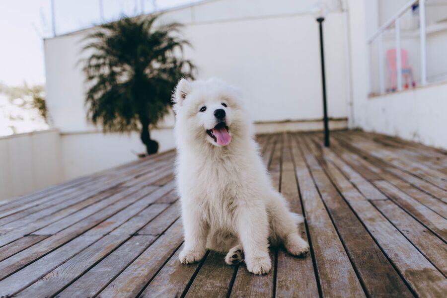 3 dicas para proteger seu pet ao passear em locais públicos