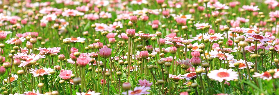 Significado da palavra primavera