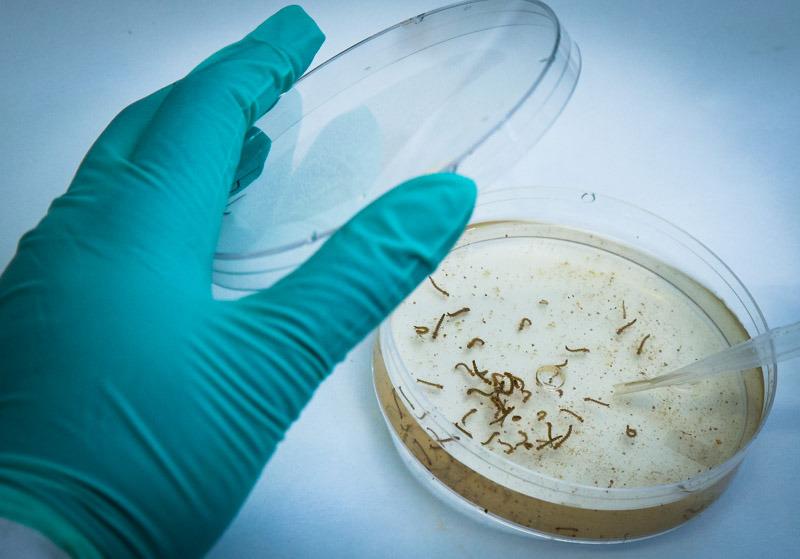 Paraná registra 1.407 novos casos de dengue e um óbito confirmado