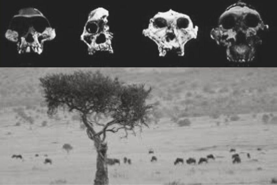 Mama África – A influência do espaço na formação das etnias