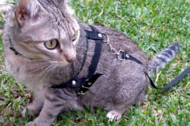 Meg: gata perdida na região do Uberaba em Curitiba