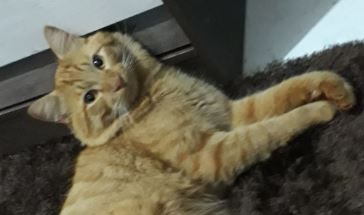 Fred: gato é visto pela última vez no Jardim Independência em Sarandi