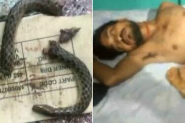 Homem fica em estado grave após morder cobra e deixá-la em pedaços
