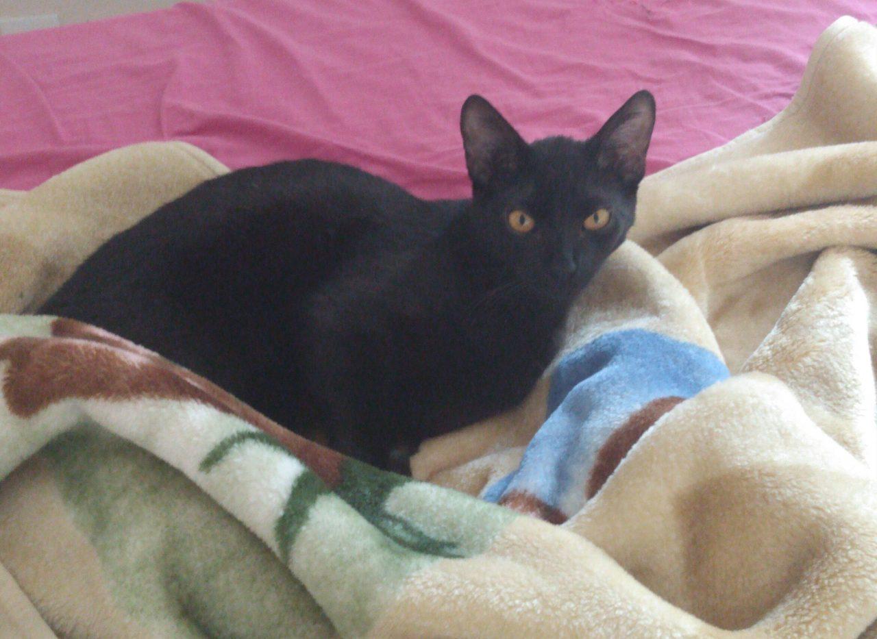 Nino: gato que passava por tratamento desaparece no bairro Portão