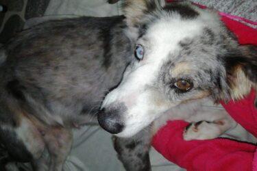 Keta: cadela desaparecida é encontrada e foge antes da dona buscá-la