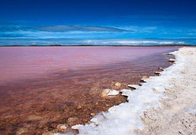 Você sabia que existe um lago rosa salgado repleto de animais mutantes?