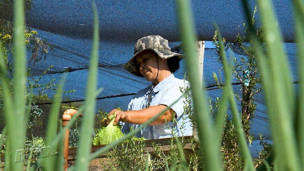 Hortas comunitárias garantem sustento para muitas famílias em Maringá