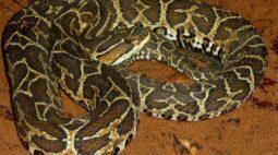 Homem morre após ser picado por cobra em chácara na Grande Curitiba