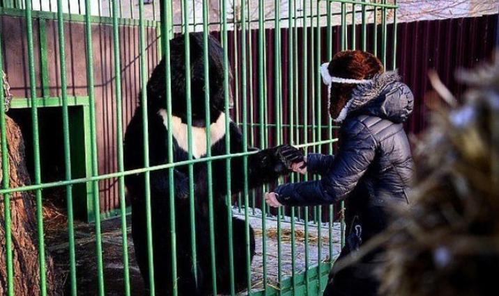 mulher beija ursos