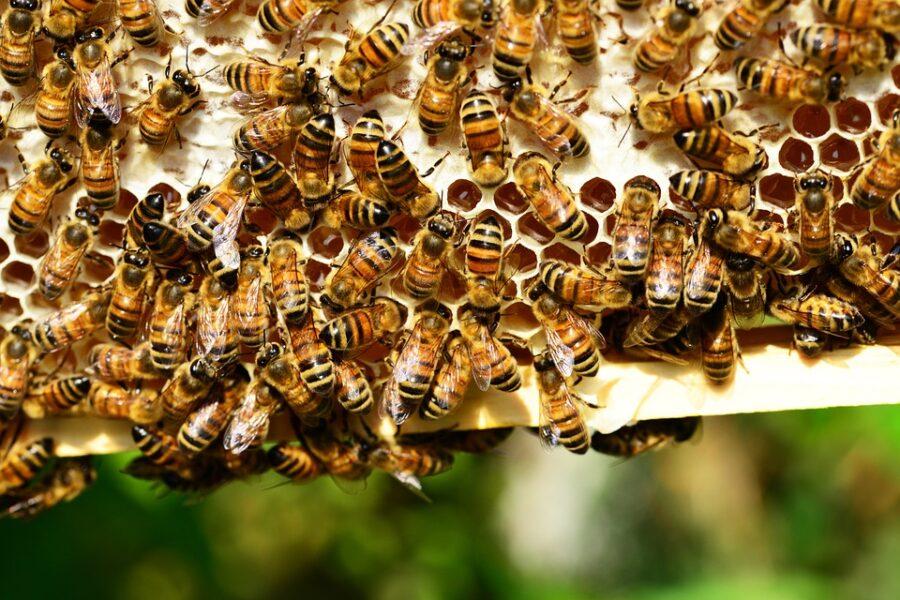 Mulher morre após ser picada por abelhas em ilha do rio Tibagi, em Londrina