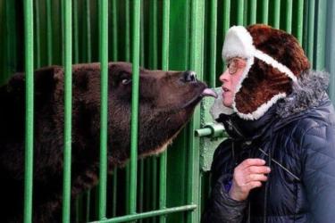 Mulher tenta beijar urso e perde a perna em ataque